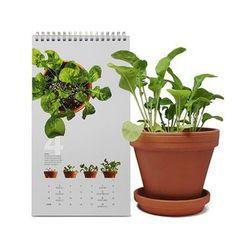 LIFE STORY - DIY 2017 Desk Calendar - Arugula & Sweet Basil