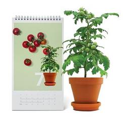 LIFE STORY - DIY 2017 Desk Calendar - Cherry Tomato & Baby Carrot
