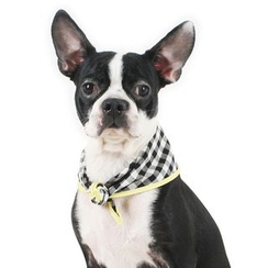 LIFE STORY - Pet Gingham Scarf