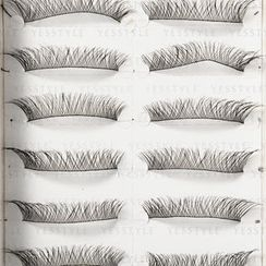 Eye's Chic - Professional Eyelashes #8-884 (10 pairs)